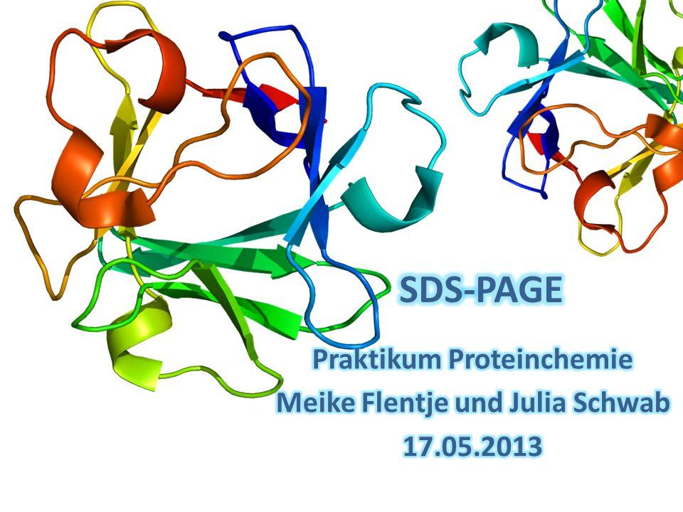 Inhalt Theorie Einleitung SDS-PAGE SDS-PAGE Probenvorbereitung Coomassie Gelfärbung Versuchsdurchführung Ergebnisse Literatur [1] 2 SDS-PAGE Meike Flentje & Julia Schwab