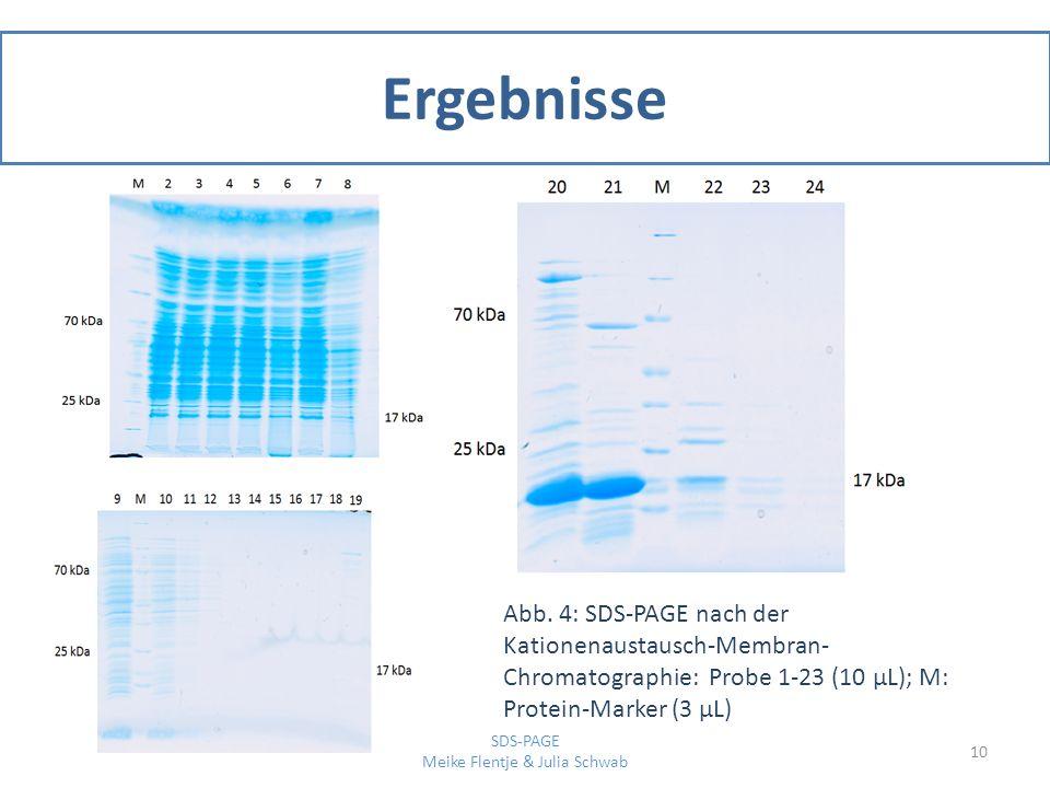 Ergebnisse 10 SDS-PAGE Meike Flentje & Julia Schwab Abb. 4: SDS-PAGE nach der Kationenaustausch-Membran- Chromatographie: Probe 1-23 (10 μL); M: Prote