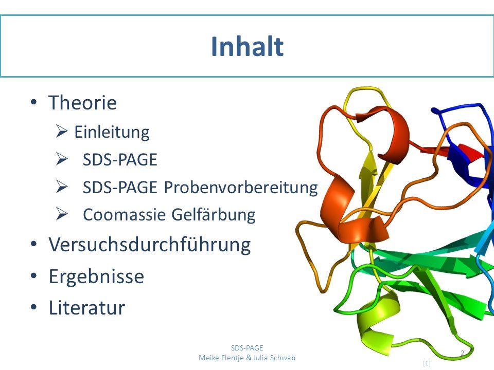 Einleitung Ziel: Produktion und Aufreinigung von dem Protein FGF-2 Es handelt sich um einen Wachstumsfaktor Dieser bindet an den FGF-2 Rezeptor und führt zur Dimerisierung [2] 3 SDS-PAGE Meike Flentje & Julia Schwab