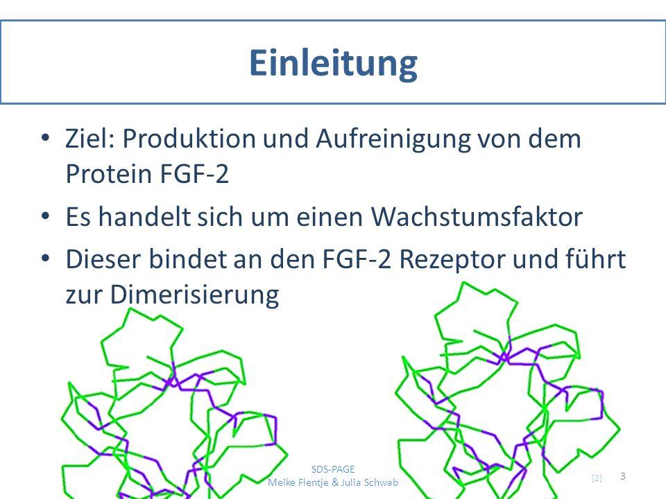 SDS-PAGE Eindimensionale Auftrennungsmethode nach der Größe Diskontinuirliches Tris-HCL / Tris-Glycin Puffersystem Sammelgel: weitporig, pH 6,8 und geringere Pufferstärke sowie Stapelung der Proteine Glycin: Folge-Ion wegen geringer Mobilität Chlorid: Leit-Ion wegen hoher Mobilität 4 SDS-PAGE Meike Flentje & Julia Schwab