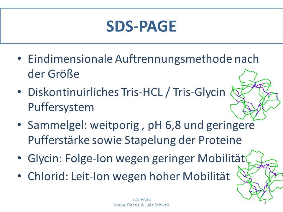 SDS-PAGE Trenngel: pH 8,8 sowie eng porig und damit erfahren die Proteine einen höheren Reibungswiderstand Folge: bessere Auftrennung und schärfere Banden [3] 5 SDS-PAGE Meike Flentje & Julia Schwab