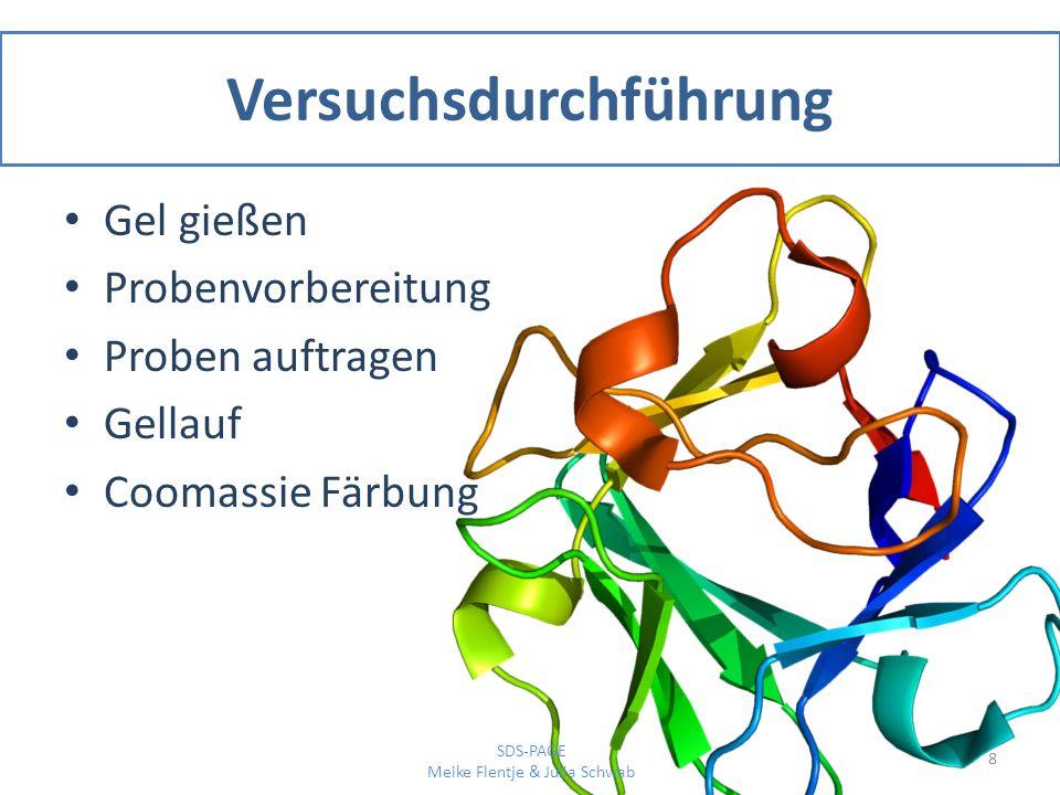 Ergebnisse 9 SDS-PAGE Meike Flentje & Julia Schwab Abb.