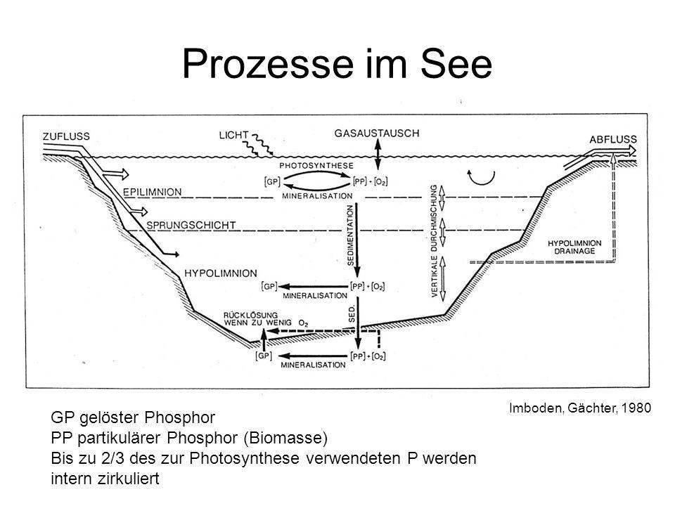 Prozesse im See Imboden, Gächter, 1980 GP gelöster Phosphor PP partikulärer Phosphor (Biomasse) Bis zu 2/3 des zur Photosynthese verwendeten P werden