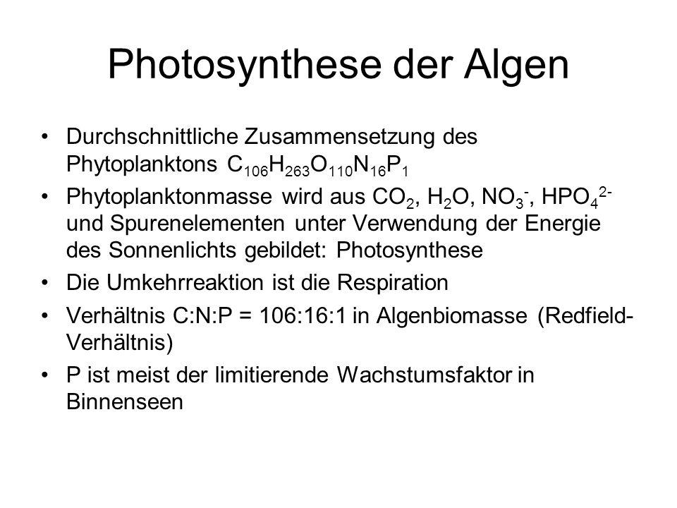 Photosynthese der Algen Durchschnittliche Zusammensetzung des Phytoplanktons C 106 H 263 O 110 N 16 P 1 Phytoplanktonmasse wird aus CO 2, H 2 O, NO 3
