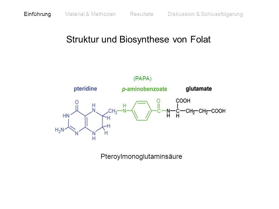 Struktur und Biosynthese von Folat Einführung Material & Methoden Resultate Diskussion & Schlussfolgerung Pteroylmonoglutaminsäure (PAPA)