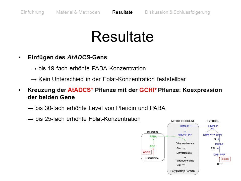 Einfügen des AtADCS-Gens bis 19-fach erhöhte PABA-Konzentration Kein Unterschied in der Folat-Konzentration feststellbar Kreuzung der AtADCS + Pflanze