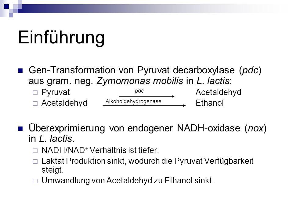 Einführung Gen-Transformation von Pyruvat decarboxylase (pdc) aus gram.