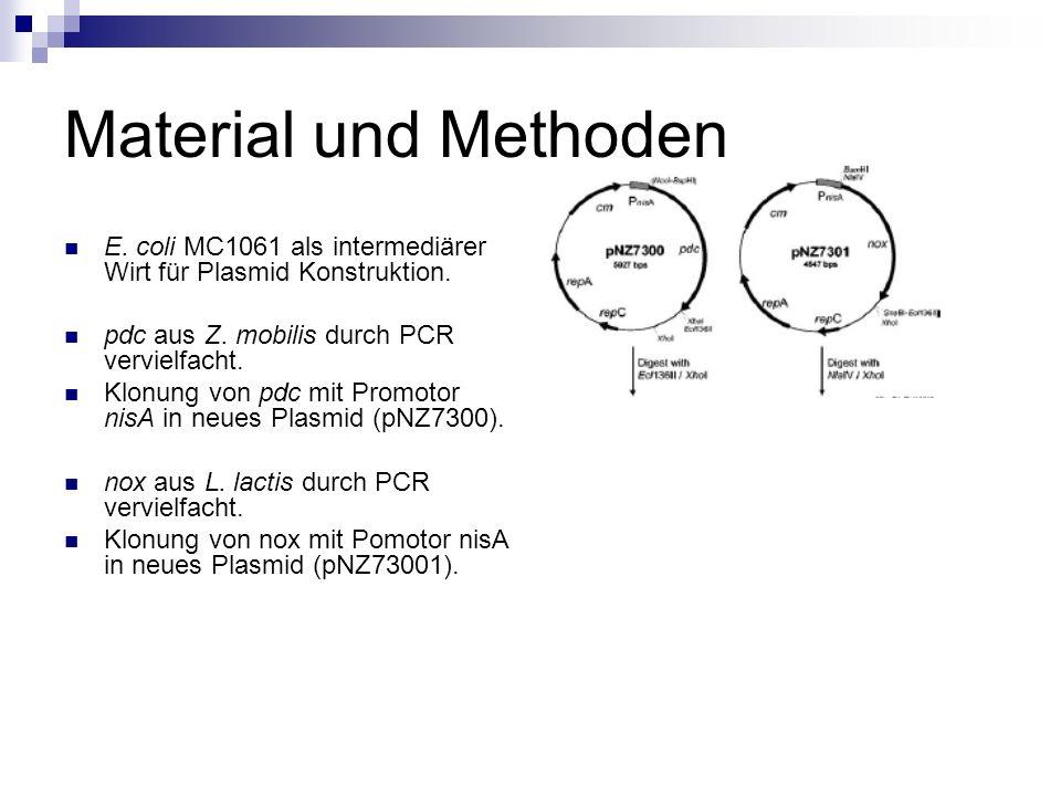 Material und Methoden nox aus Plasmid pNZ7301 wird erneut geklont, diesmal in das pdc enthaltene Plasmid pNZ7300.