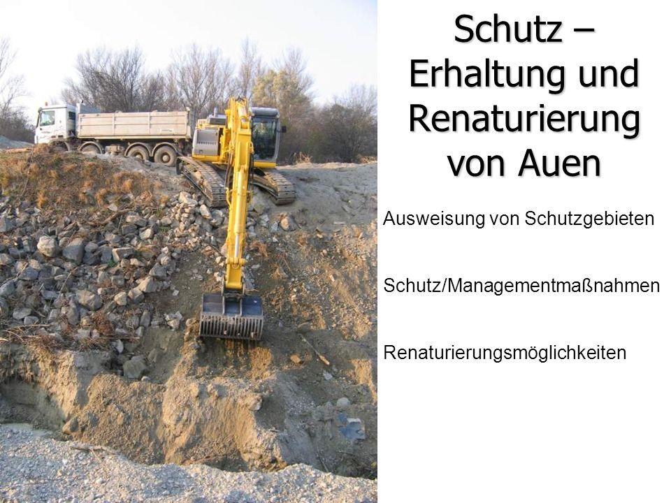 Schutz – Erhaltung und Renaturierung von Auen Ausweisung von Schutzgebieten Schutz/Managementmaßnahmen Renaturierungsmöglichkeiten