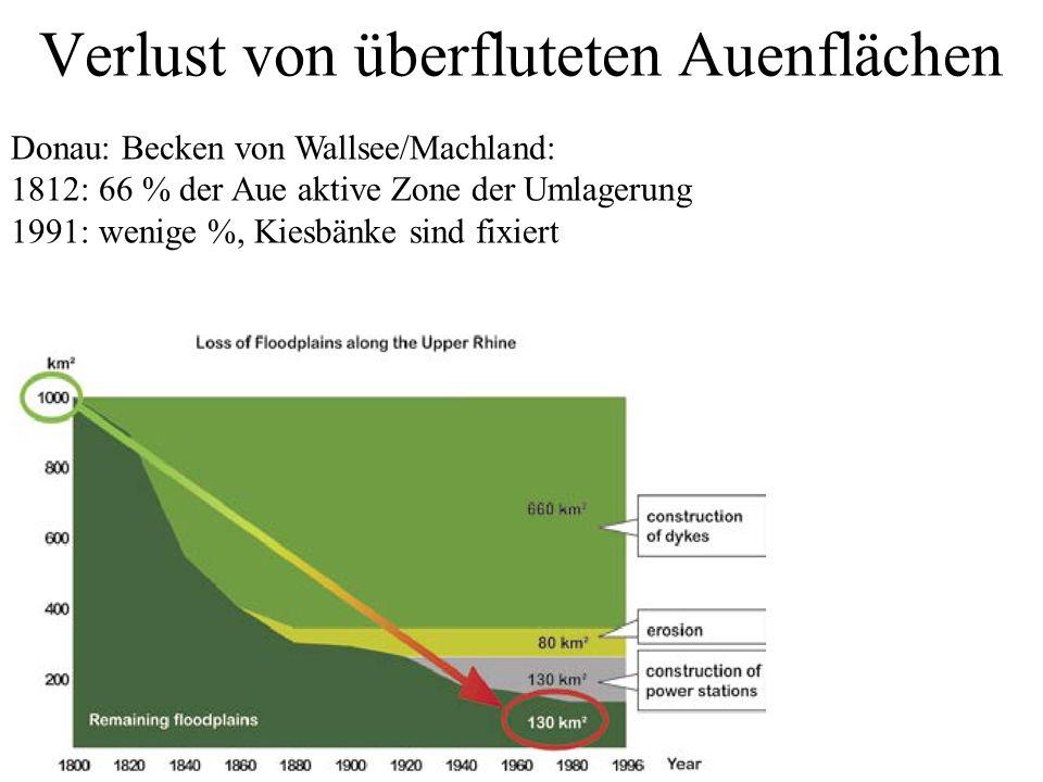 Verlust von überfluteten Auenflächen Donau: Becken von Wallsee/Machland: 1812: 66 % der Aue aktive Zone der Umlagerung 1991: wenige %, Kiesbänke sind