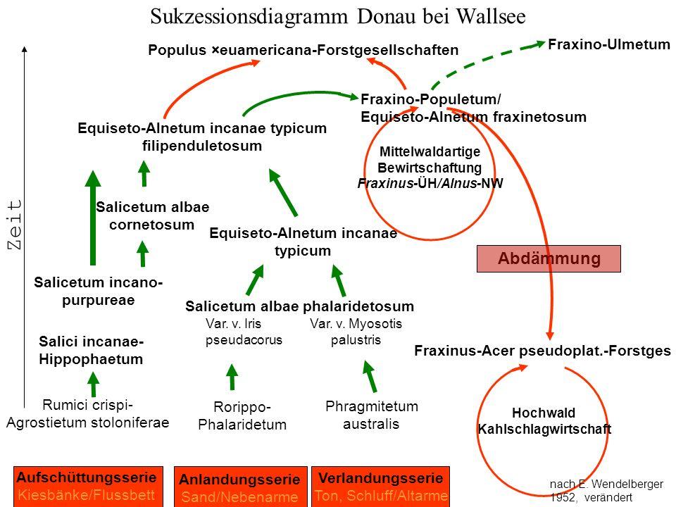 Sukzessionsdiagramm Donau bei Wallsee Rumici crispi- Agrostietum stoloniferae Aufschüttungsserie Kiesbänke/Flussbett Salicetum albae phalaridetosum Sa