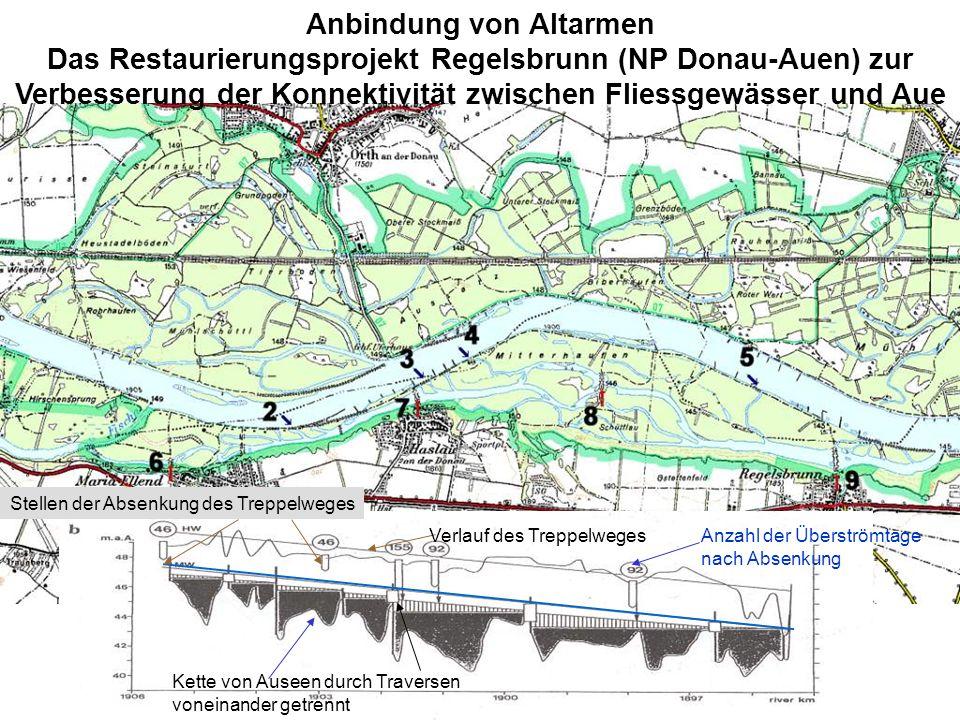 Anbindung von Altarmen Das Restaurierungsprojekt Regelsbrunn (NP Donau-Auen) zur Verbesserung der Konnektivität zwischen Fliessgewässer und Aue Verlau