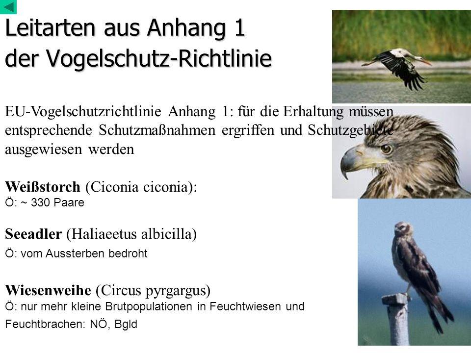Leitarten aus Anhang 1 der Vogelschutz-Richtlinie EU-Vogelschutzrichtlinie Anhang 1: für die Erhaltung müssen entsprechende Schutzmaßnahmen ergriffen