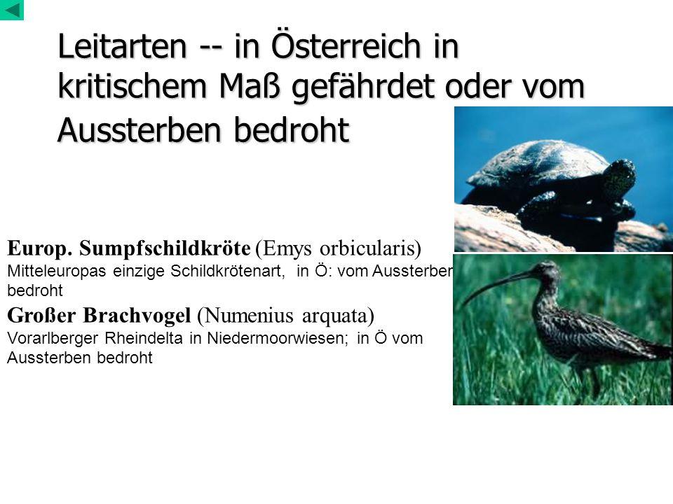Leitarten -- in Österreich in kritischem Maß gefährdet oder vom Aussterben bedroht Europ. Sumpfschildkröte (Emys orbicularis) Mitteleuropas einzige Sc