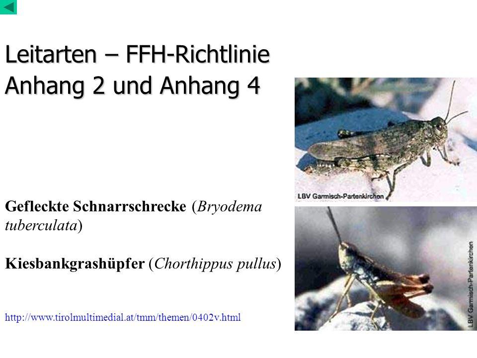 Leitarten – FFH-Richtlinie Anhang 2 und Anhang 4 Gefleckte Schnarrschrecke (Bryodema tuberculata) Kiesbankgrashüpfer (Chorthippus pullus) http://www.t