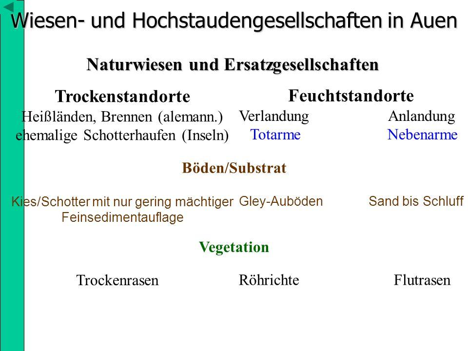 Wiesen- und Hochstaudengesellschaften in Auen Naturwiesen und Ersatzgesellschaften Trockenstandorte Heißländen, Brennen (alemann.) ehemalige Schotterh