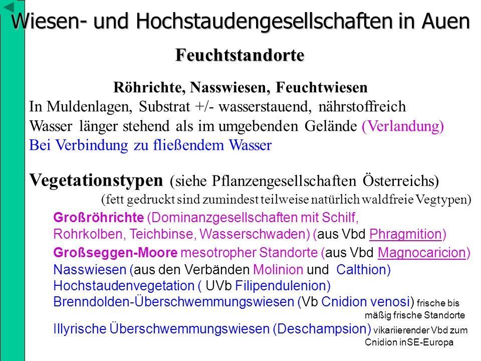 Wiesen- und Hochstaudengesellschaften in Auen Feuchtstandorte Röhrichte, Nasswiesen, Feuchtwiesen In Muldenlagen, Substrat +/- wasserstauend, nährstof
