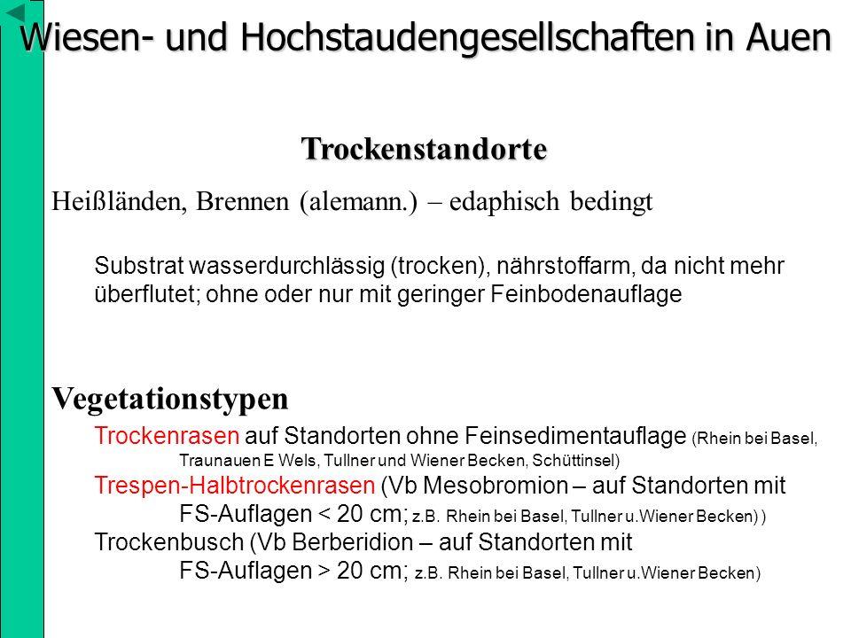 Wiesen- und Hochstaudengesellschaften in Auen Trockenstandorte Heißländen, Brennen (alemann.) – edaphisch bedingt Substrat wasserdurchlässig (trocken)