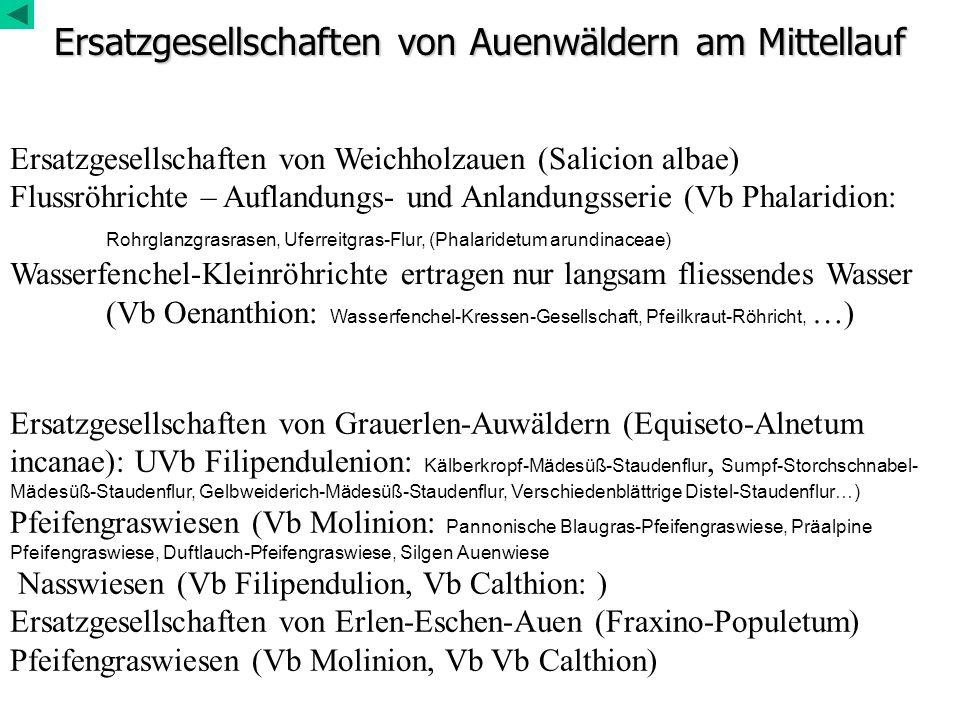 Ersatzgesellschaften von Auenwäldern am Mittellauf Ersatzgesellschaften von Weichholzauen (Salicion albae) Flussröhrichte – Auflandungs- und Anlandung