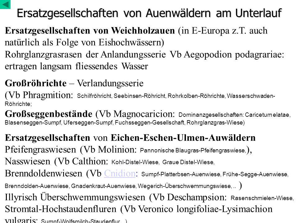 Ersatzgesellschaften von Auenwäldern am Unterlauf Ersatzgesellschaften von Weichholzauen (in E-Europa z.T. auch natürlich als Folge von Eishochwässern