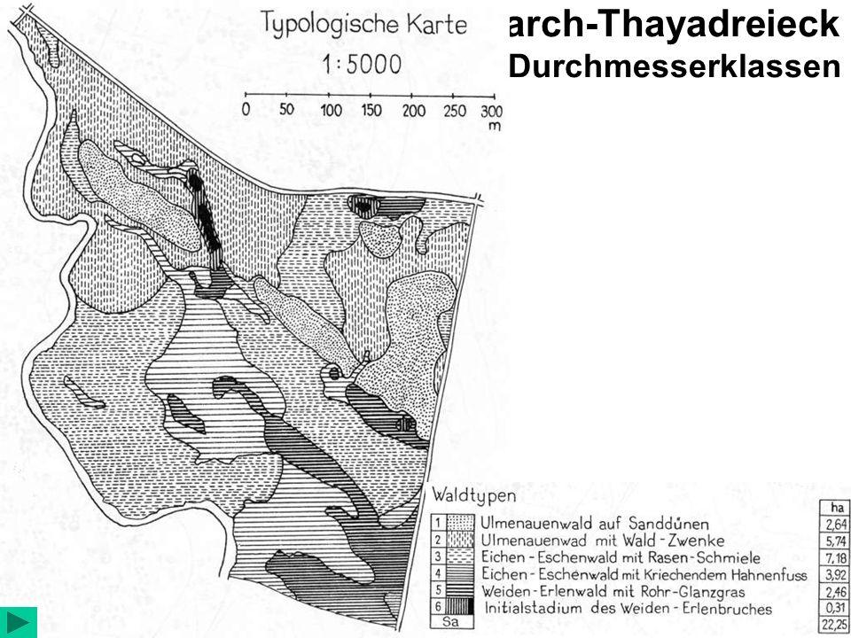 Auen-Urwald Ranspurk – March-Thayadreieck Verteilung der Holzarten in den Durchmesserklassen