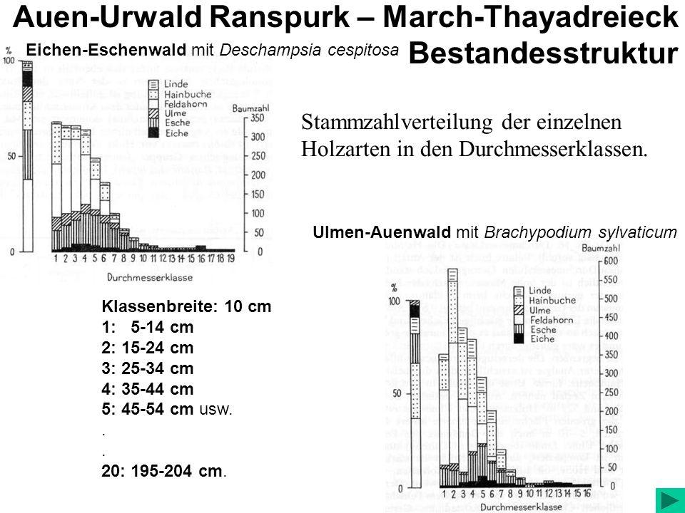 Auen-Urwald Ranspurk – March-Thayadreieck Bestandesstruktur Stammzahlverteilung der einzelnen Holzarten in den Durchmesserklassen.