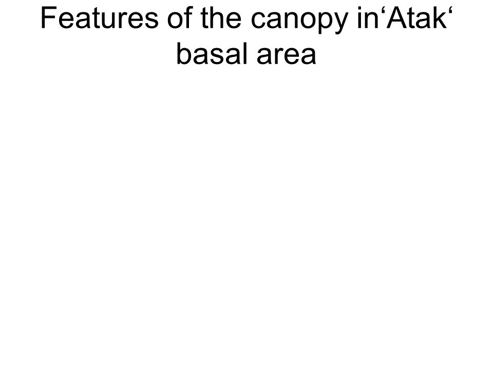 Features of the canopy inAtak basal area