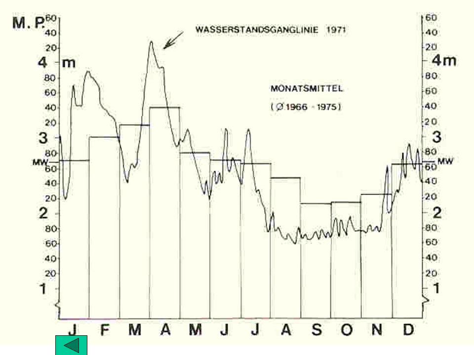 Strukturtypen Untere March-Auen Marchegg Streifen A Dister & Drescher 1987: Streifen A Eschen-(Eichen-) bestand Flä: 0,05 ha, 58 leb.