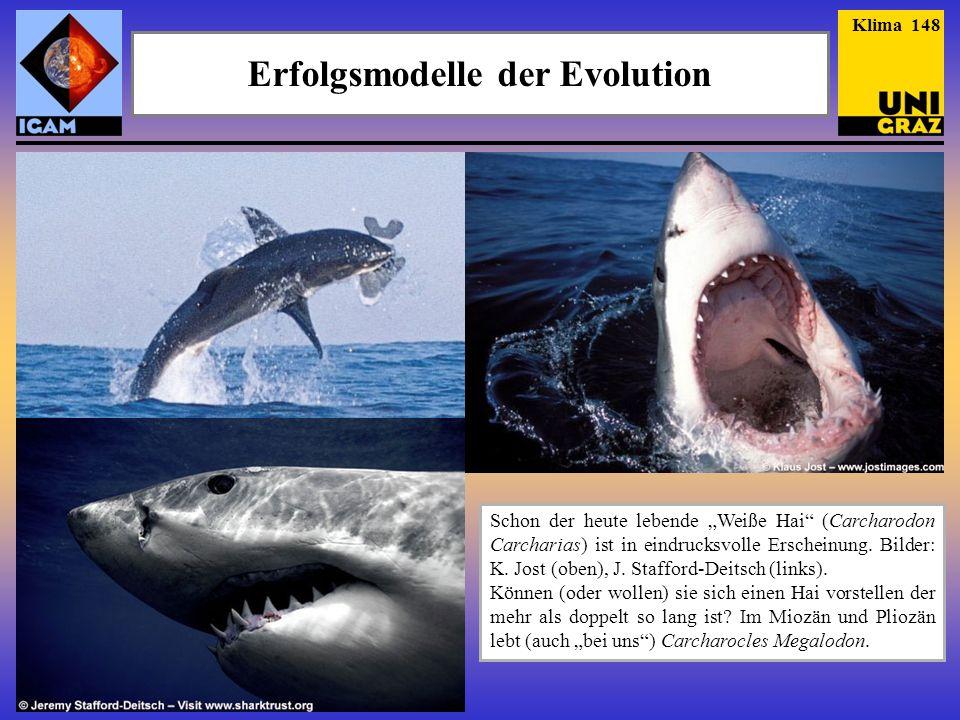 Erfolgsmodelle der Evolution Megalodon ist in diesem Fall wirklich keine Übertreibung.