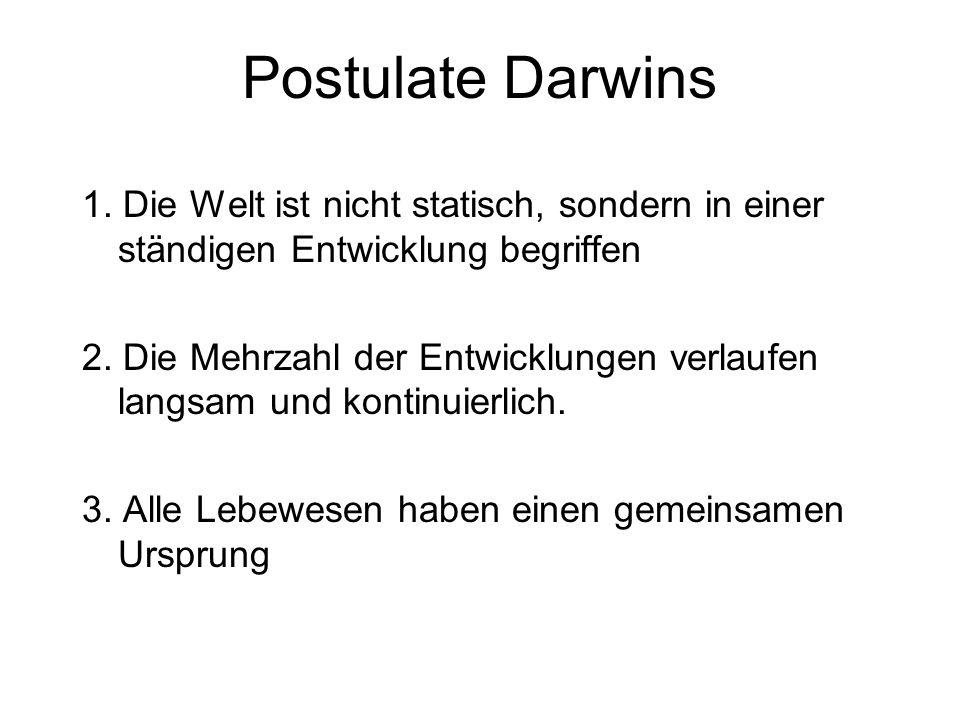 Postulate Darwins 1. Die Welt ist nicht statisch, sondern in einer ständigen Entwicklung begriffen 2. Die Mehrzahl der Entwicklungen verlaufen langsam