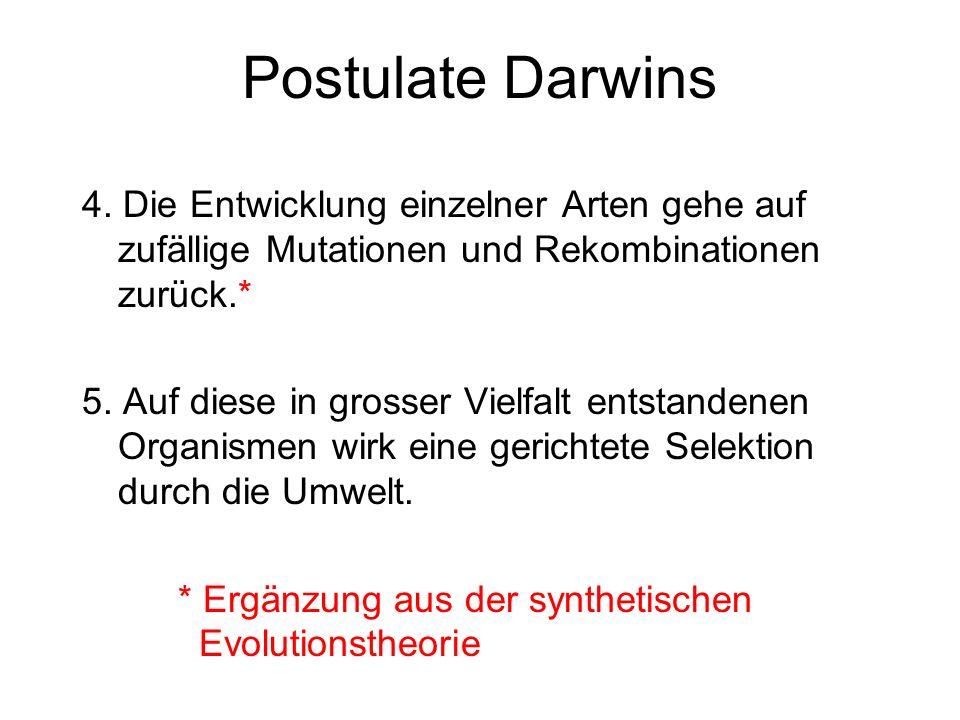 Postulate Darwins 4. Die Entwicklung einzelner Arten gehe auf zufällige Mutationen und Rekombinationen zurück.* 5. Auf diese in grosser Vielfalt entst