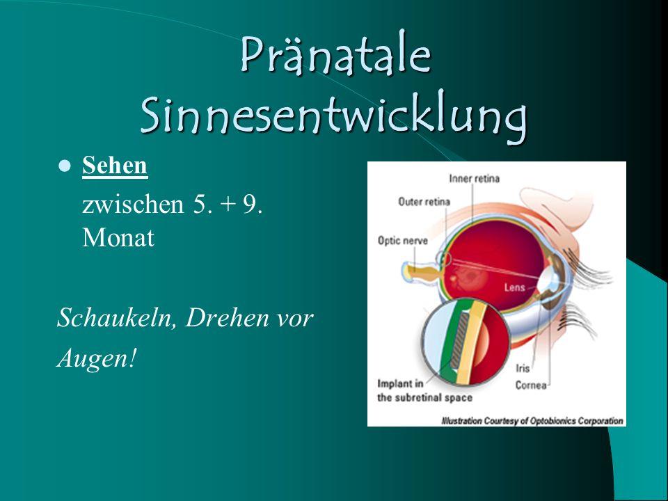 Pränatale Sinnesentwicklung Sehen zwischen 5. + 9. Monat Schaukeln, Drehen vor Augen!
