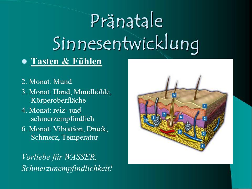 Pränatale Sinnesentwicklung Schmecken & Riechen 2.- 4. Monat 6.- 9. Monat auffällig & Eigenheiten