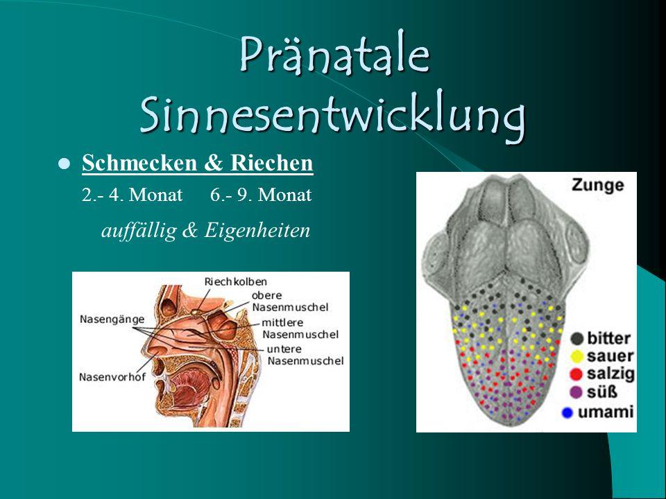 Pränatale Sinnesentwicklung Gleichgewicht Vestibuläres System ab Ende 3.