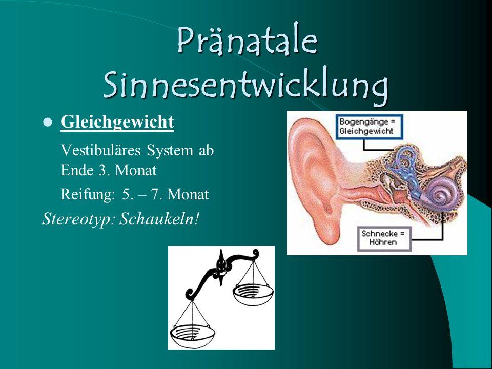Pränatale Sinnesentwicklung Gleichgewicht Vestibuläres System ab Ende 3. Monat Reifung: 5. – 7. Monat Stereotyp: Schaukeln!