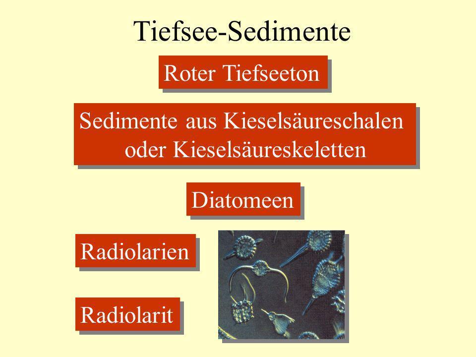Tiefsee-Sedimente Roter Tiefseeton Sedimente aus Kieselsäureschalen oder Kieselsäureskeletten Sedimente aus Kieselsäureschalen oder Kieselsäureskelett
