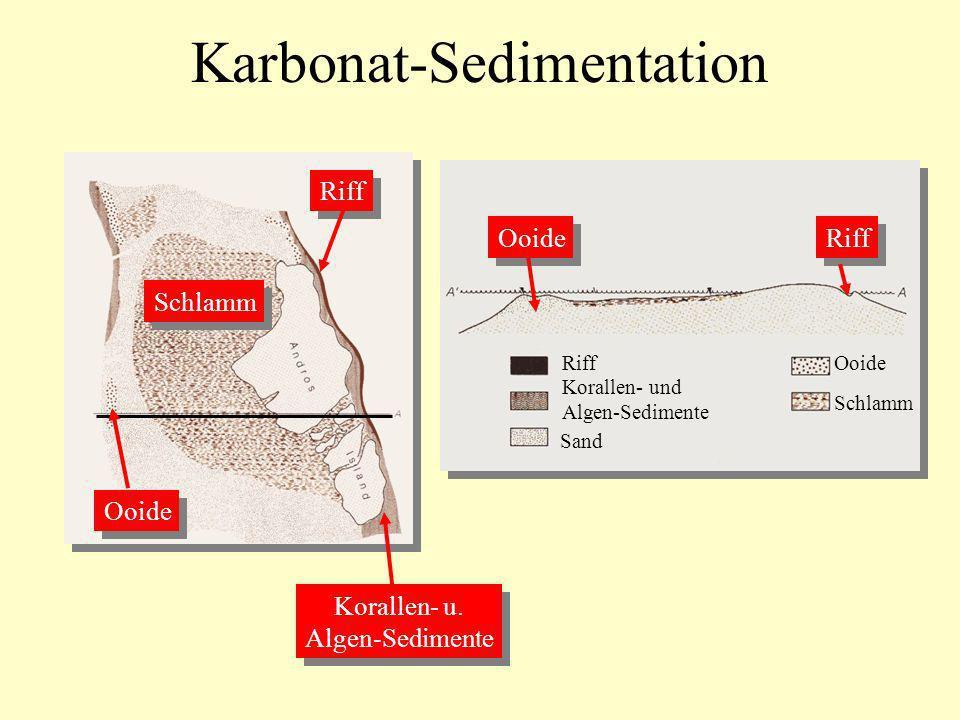 Karbonat-Sedimentation Riff Korallen- und Algen-Sedimente Sand Ooide Schlamm Ooide Riff Korallen- u. Algen-Sedimente Korallen- u. Algen-Sedimente Schl