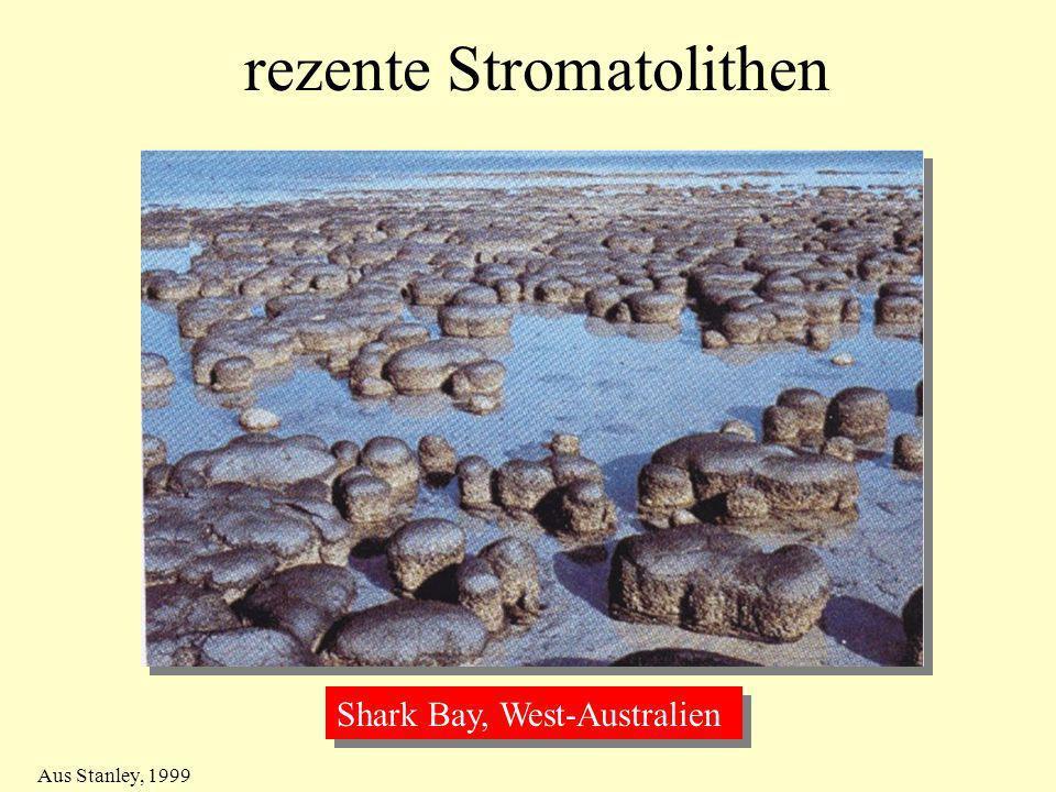 rezente Stromatolithen Shark Bay, West-Australien Aus Stanley, 1999
