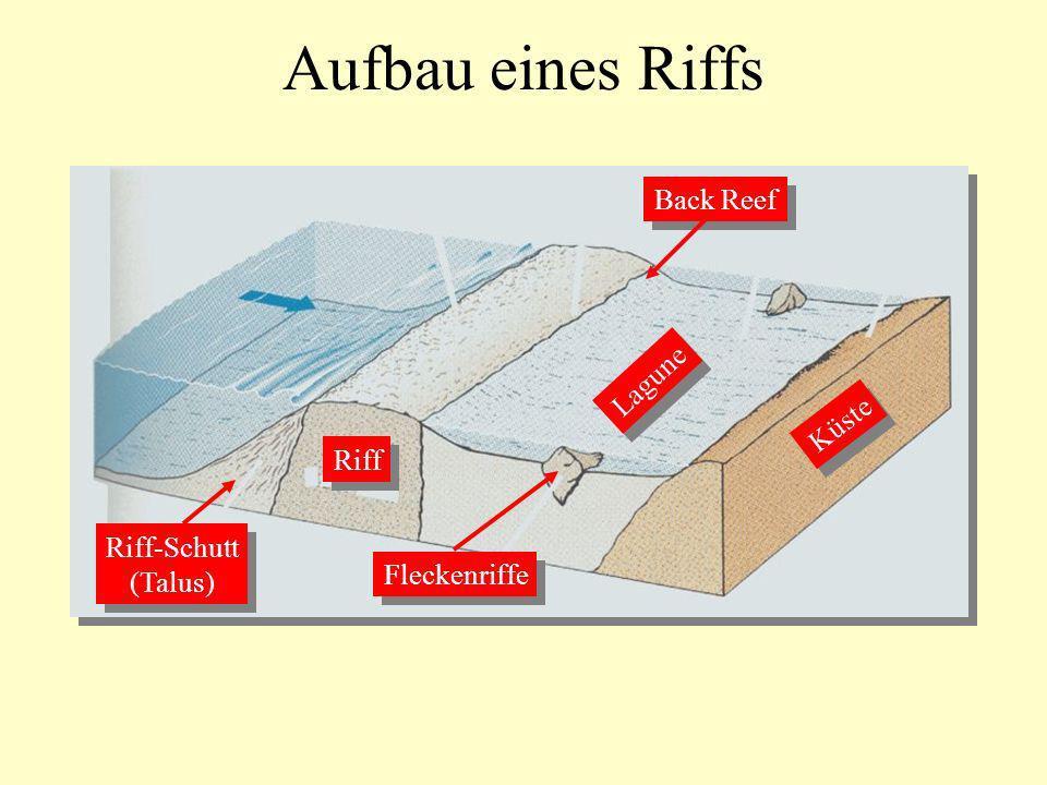 Aufbau eines Riffs Riff Back Reef Riff-Schutt (Talus) Riff-Schutt (Talus) Lagune Küste Fleckenriffe