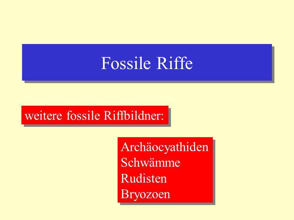 Fossile Riffe weitere fossile Riffbildner: Archäocyathiden Schwämme Rudisten Bryozoen Archäocyathiden Schwämme Rudisten Bryozoen