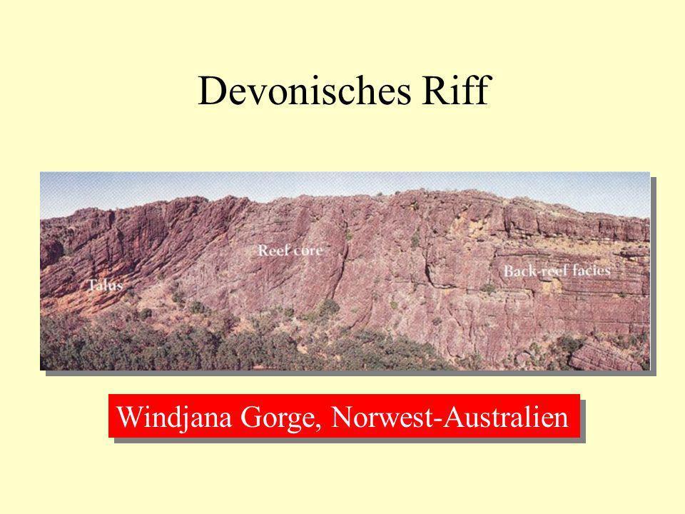 Devonisches Riff Windjana Gorge, Norwest-Australien
