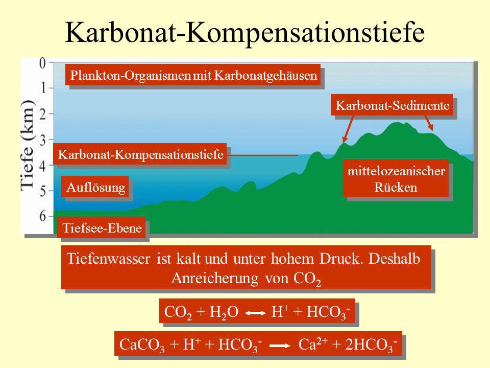 Karbonat-Kompensationstiefe Tiefsee-Ebene mittelozeanischer Rücken mittelozeanischer Rücken Karbonat-Kompensationstiefe Auflösung Karbonat-Sedimente P