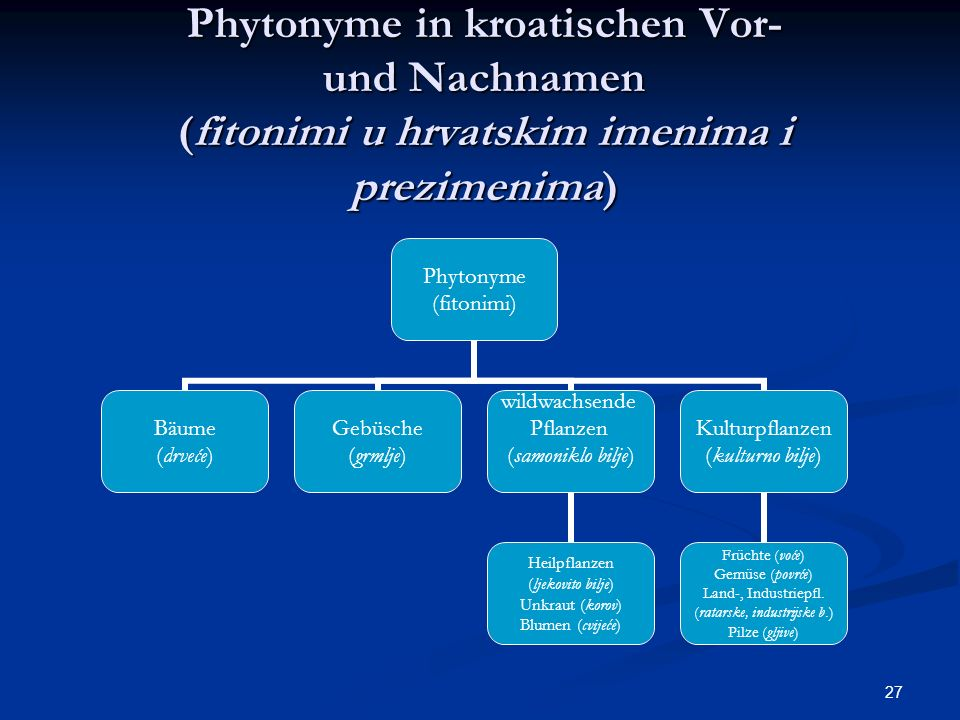 27 Phytonyme in kroatischen Vor- und Nachnamen (fitonimi u hrvatskim imenima i prezimenima) Phytonyme (fitonimi) Bäume (drveće) Gebüsche (grmlje) wild