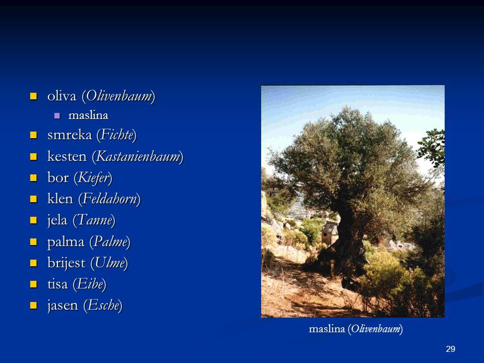 29 oliva (Olivenbaum) oliva (Olivenbaum) maslina maslina smreka (Fichte) smreka (Fichte) kesten (Kastanienbaum) kesten (Kastanienbaum) bor (Kiefer) bo