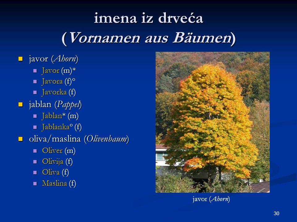 30 imena iz drveća (Vornamen aus Bäumen) javor (Ahorn) javor (Ahorn) Javor (m)* Javor (m)* Javora (f)° Javora (f)° Javorka (f) Javorka (f) jablan (Pap