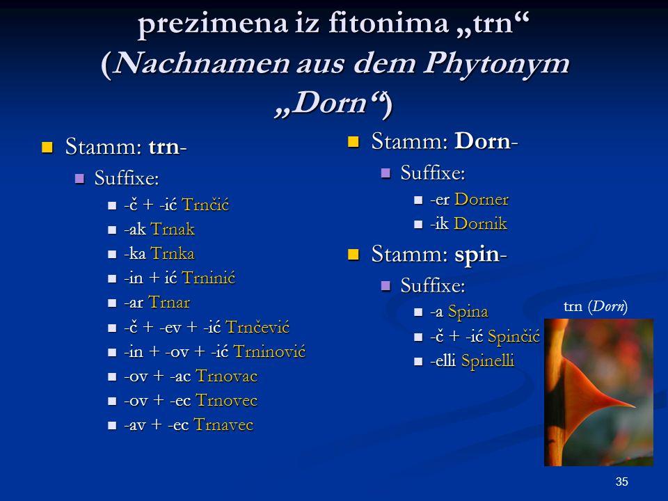 35 prezimena iz fitonima trn (Nachnamen aus dem Phytonym Dorn) Stamm: trn- Stamm: trn- Suffixe: Suffixe: -č + -ić Trnčić -č + -ić Trnčić -ak Trnak -ak