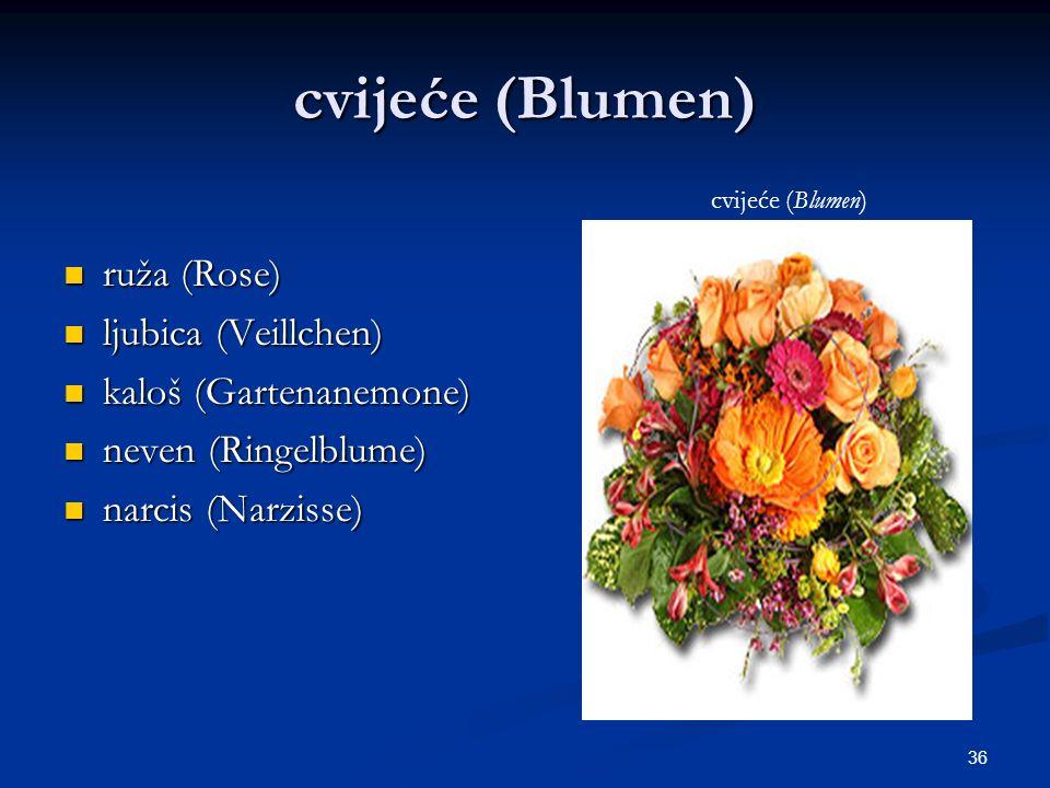 36 cvijeće (Blumen) ruža (Rose) ruža (Rose) ljubica (Veillchen) ljubica (Veillchen) kaloš (Gartenanemone) kaloš (Gartenanemone) neven (Ringelblume) ne