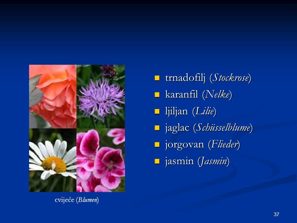 37 trnadofilj (Stockrose) karanfil (Nelke) ljiljan (Lilie) jaglac (Schüsselblume) jorgovan (Flieder) jasmin (Jasmin) cvijeće (Blumen)