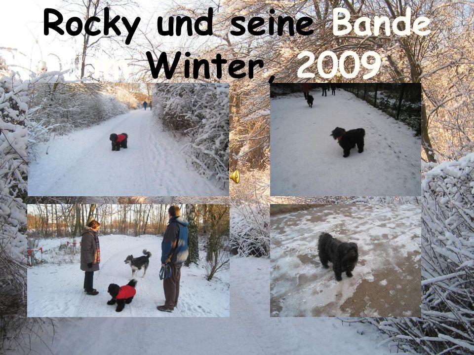 Rocky und seine Bande im Winter, 2009