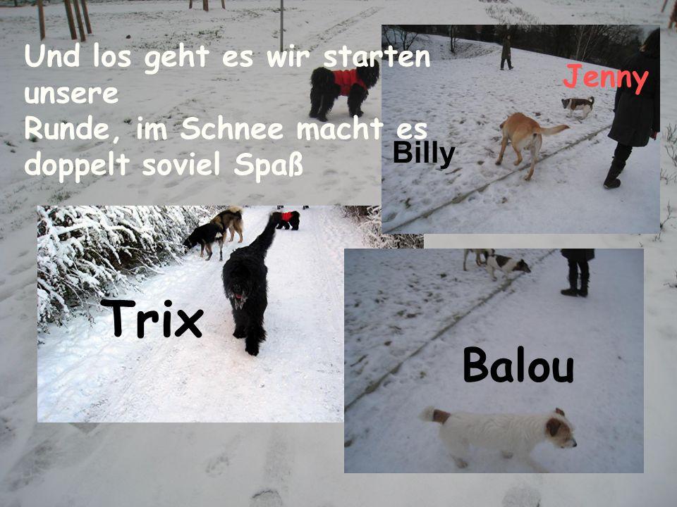 Trix Billy Jenny Balou Und los geht es wir starten unsere Runde, im Schnee macht es doppelt soviel Spaß